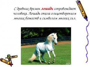 С древних времен лошадь сопровождает человека. Лошадь стала олицетворением многи