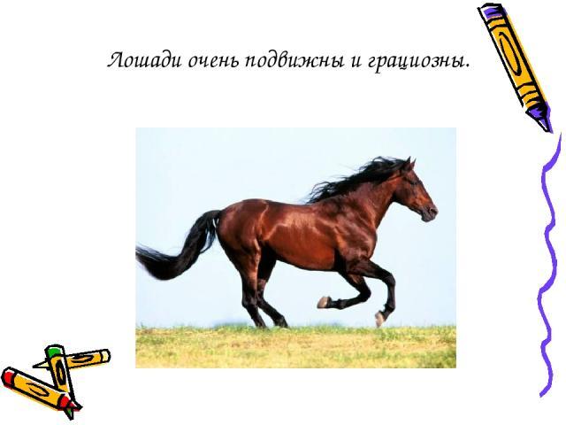 Лошади очень подвижны и грациозны.