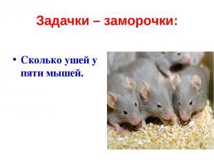 Задачки – заморочки: Сколько ушей у пяти мышей.
