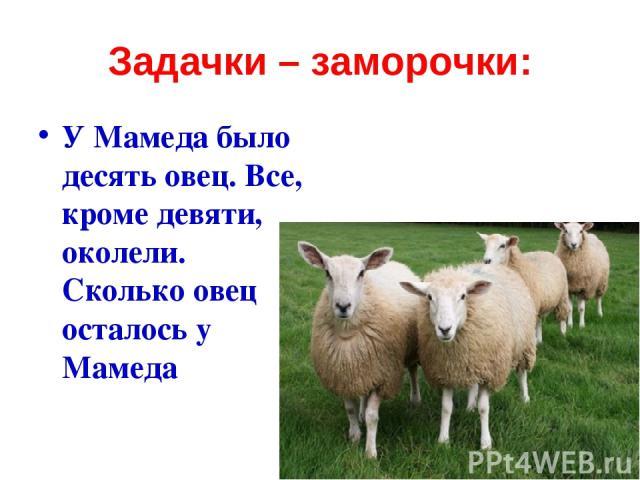 Задачки – заморочки: У Мамеда было десять овец. Все, кроме девяти, околели. Сколько овец осталось у Мамеда