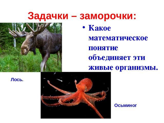 Задачки – заморочки: Какое математическое понятие объединяет эти живые организмы. Лось. Осьминог