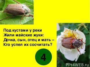 Под кустами у реки Жили майские жуки: Дочка, сын, отец и мать – Кто успел их сос
