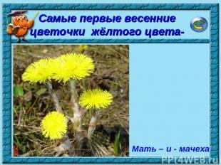 * Мать – и - мачеха Самые первые весенние цветочки жёлтого цвета-