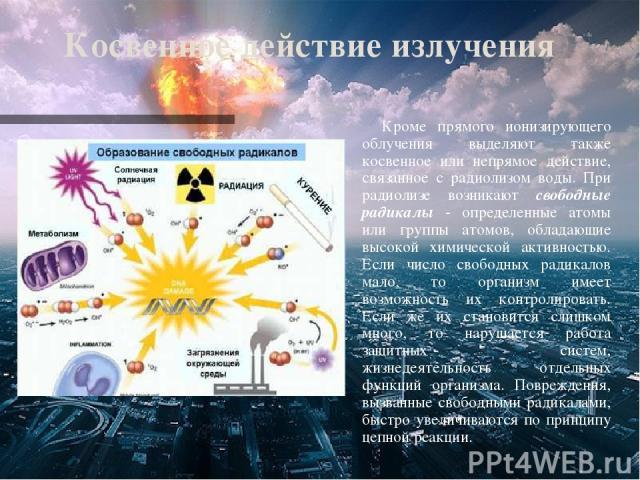 Косвенное действие излучения Кроме прямого ионизирующего облучения выделяют также косвенное или непрямое действие, связанное с радиолизом воды. При радиолизе возникают свободные радикалы - определенные атомы или группы атомов, обладающие высокой хим…