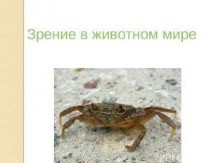 Зрение в животном мире