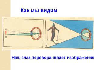 Как мы видим Наш глаз переворачивает изображение