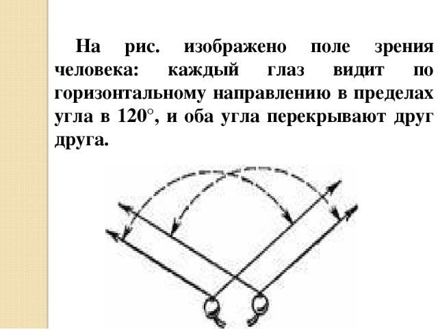 На рис. изображено поле зрения человека: каждый глаз видит по горизонтальному направлению в пределах угла в 120°, и оба угла перекрывают друг друга.