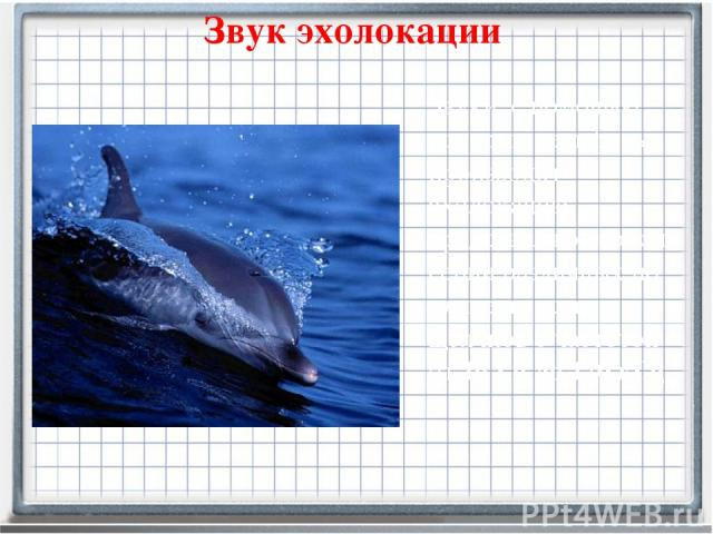Звук эхолокации Звуки, с помощью которых дельфины производят эхолокацию, представляют собой серии различных по длительности щелчков с частотой от 16 Гц до 170 кГц.
