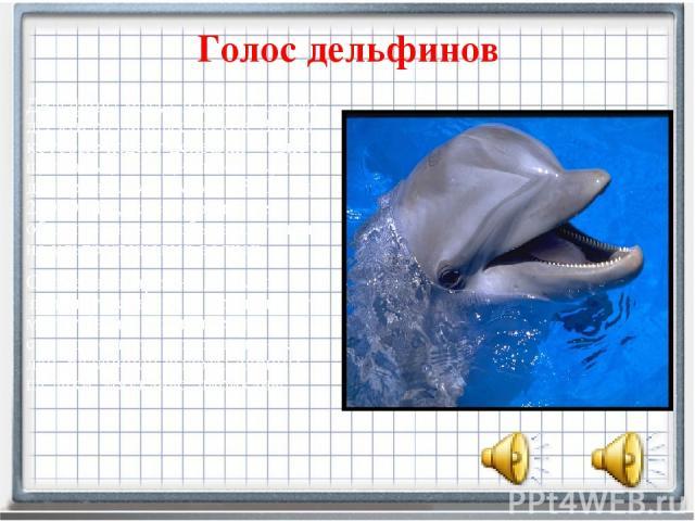 Голос дельфинов Дельфинымогут издавать около десяти различных звуков. Звуки, которые издает дельфин – свист, щелканье, лай. Диапазон звуков дельфина лежит между 3000 Гц и 200000 Гц, то есть он может общаться как на обычных, так и на ультразвуковых …