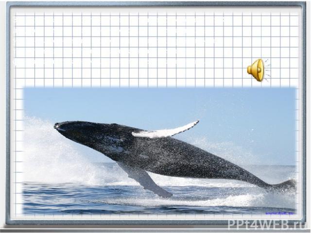 Знаменитые песни китов, громкость которых достигает 188 децибел. Смысл этих песен до конца не понятен, однако ученые заметили, что