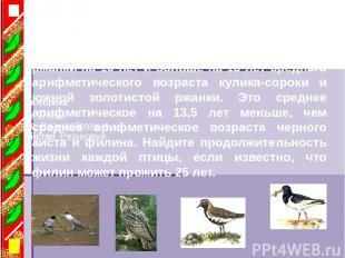 Южная золотистая ржанка Кулик-сорока Класс ·Птицы Отряд ·Ржанкообразные Семейств