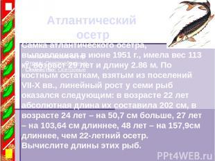 Атлантический осетр Атлантический осетр Отряд: Осетрообразные Семейство: Осетров