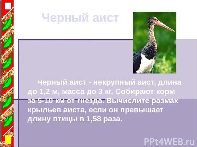 Черный аист Черный аист - некрупный аист, длина до 1,2 м, масса до 3 кг. Собирают корм за 5-10 км от гнезда. Вычислите размах крыльев аиста, если он превышает длину птицы в 1,58 раза.