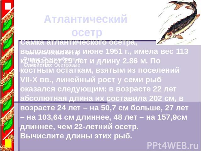 Атлантический осетр Атлантический осетр Отряд: Осетрообразные Семейство: Осетровые Самка атлантического осетра, выловленная в июне 1951 г., имела вес 113 кг, возраст 29 лет и длину 2.86 м. По костным остаткам, взятым из поселений VII-X вв., линейный…