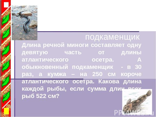 Длина речной миноги составляет одну девятую часть от длины атлантического осетра. А обыкновенный подкаменщик - в 30 раз, а кумжа – на 250 см короче атлантического осетра. Какова длина каждой рыбы, если сумма длин всех рыб 522 см? Речная минога Обыкн…
