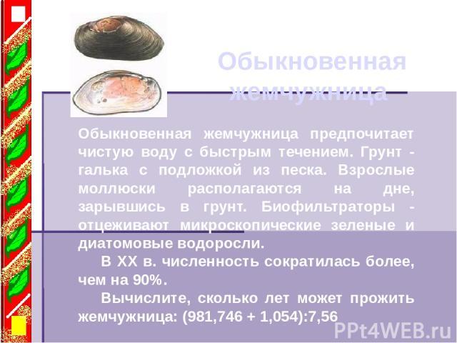 Обыкновенная жемчужница Обыкновенная жемчужница предпочитает чистую воду с быстрым течением. Грунт - галька с подложкой из песка. Взрослые моллюски располагаются на дне, зарывшись в грунт. Биофильтраторы - отцеживают микроскопические зеленые и диато…