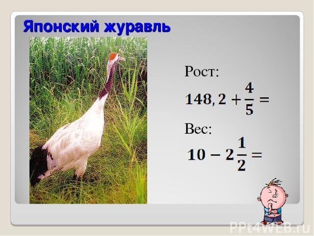 Рост: Вес: Японский журавль