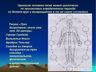Организм человека тоже живет циклически по прошествии определенного периода он д