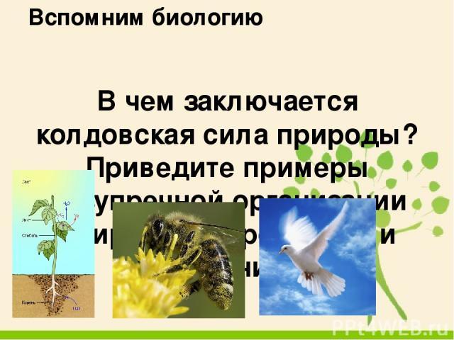 Литературная гостиная В.П. Астафьев «Конь с розовой гривой»