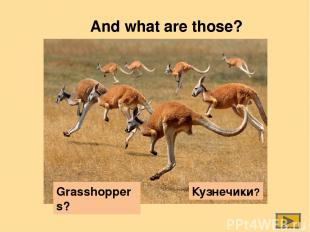 And what are those? Grasshoppers? Кузнечики?