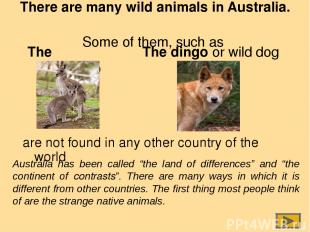 There are many wild animals in Australia. Some of them, such as The kangaroo are