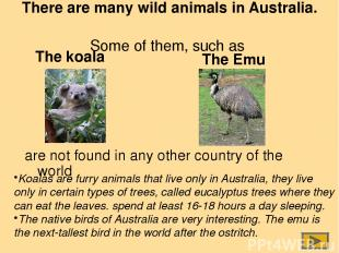 The Emu Koalas are furry animals that live only in Australia, they live only in