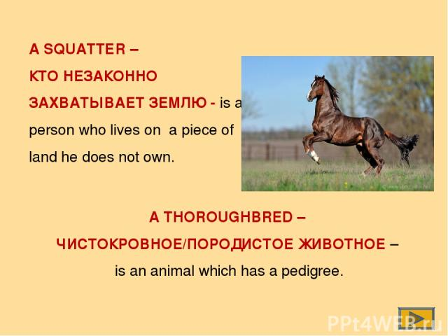 A SQUATTER – КТО НЕЗАКОННО ЗАХВАТЫВАЕТ ЗЕМЛЮ - is a person who lives on a piece of land he does not own. A THOROUGHBRED – ЧИСТОКРОВНОЕ/ПОРОДИСТОЕ ЖИВОТНОЕ – is an animal which has a pedigree.