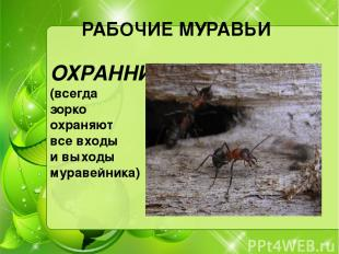 РАБОЧИЕ МУРАВЬИ ОХРАННИКИ (всегда зорко охраняют все входы и выходы муравейника)