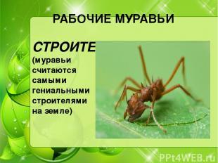 РАБОЧИЕ МУРАВЬИ СТРОИТЕЛИ (муравьи считаются самыми гениальными строителями на з