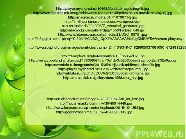 http://en.citizendium.org/images/3/39/800px-Ant_on_leaf.jpg http://novynynauky.com/_nw/30/40014448.jpg http://www.factroom.ru/wp-content/uploads/2015/10/1358.jpg http://goodnewsanimal.ru/_nw/43/68205142.jpg http://player.myshared.ru/1046820/data/ima…