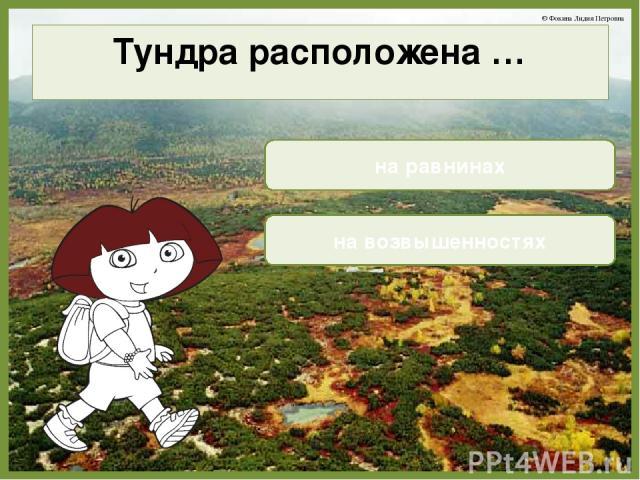 Тундра расположена … на равнинах на возвышенностях © Фокина Лидия Петровна