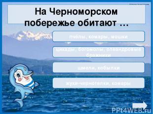 На Черноморском побережье обитают … пчёлы, комары, мошки цикады, богомолы, олеан