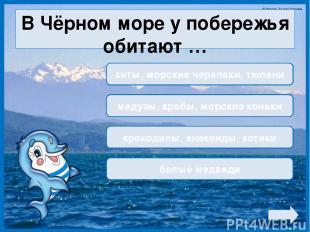 В Чёрном море у побережья обитают … киты, морские черепахи, тюлени медузы, крабы