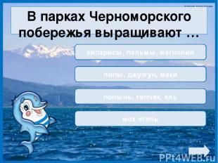 В парках Черноморского побережья выращивают … кипарисы, пальмы, магнолии липы, д