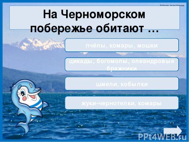 На Черноморском побережье обитают … пчёлы, комары, мошки цикады, богомолы, олеандровые бражники шмели, кобылки жуки-чернотелки, комары © Фокина Лидия Петровна