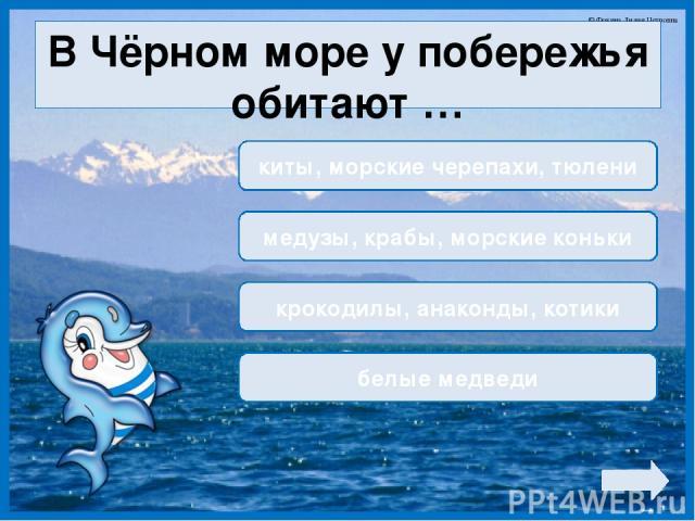 В Чёрном море у побережья обитают … киты, морские черепахи, тюлени медузы, крабы, морские коньки крокодилы, анаконды, котики белые медведи © Фокина Лидия Петровна