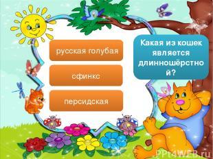 Какая из кошек является длинношёрстной? русская голубая сфинкс персидская