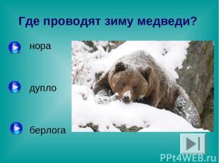 Где проводят зиму медведи? нора дупло берлога