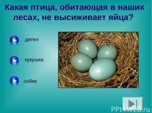 Какая птица, обитающая в наших лесах, не высиживает яйца? дятел сойка кукушка