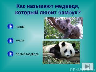 Как называют медведя, который любит бамбук? панда коала белый медведь
