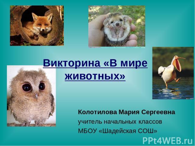 Викторина «В мире животных» Колотилова Мария Сергеевна учитель начальных классов МБОУ «Шадейская СОШ»