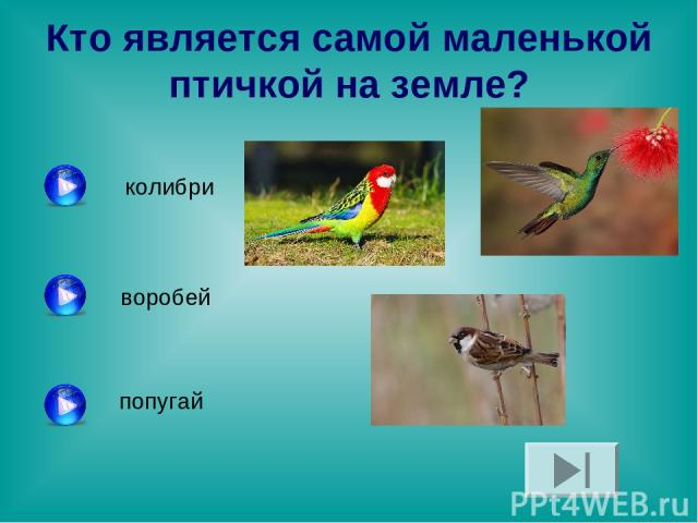 Кто является самой маленькой птичкой на земле? колибри воробей попугай