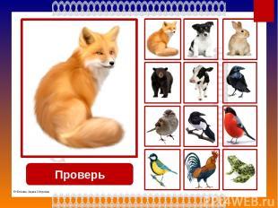 Проверь собака © Фокина Лидия Петровна