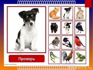 Проверь заяц © Фокина Лидия Петровна