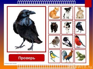 Используемые источники Кружево http://img-fotki.yandex.ru/get/5633/39663434.369/