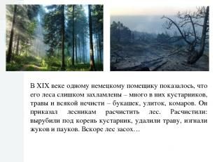 В XIX веке одному немецкому помещику показалось, что его леса слишком захламлены