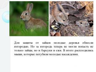 Для защиты от зайцев молодые деревья обнесли изгородью. Но за изгородь теперь не