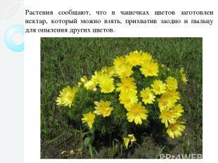 Растения сообщают, что в чашечках цветов заготовлен нектар, который можно взять,