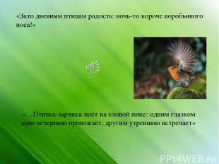 «Зато дневным птицам радость: ночь-то короче воробьиного носа!» «…Птичка-зарянка