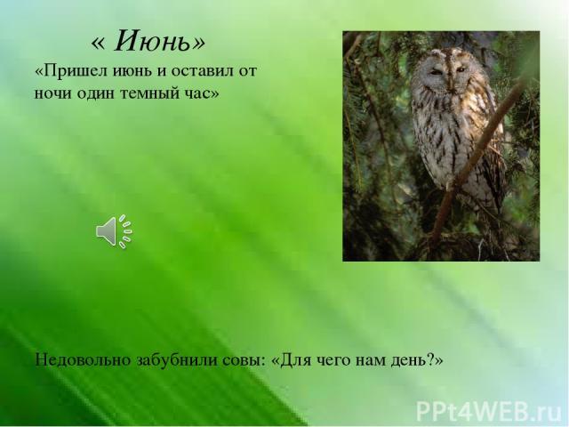« Июнь» «Пришел июнь и оставил от ночи один темный час» Недовольно забубнили совы: «Для чего нам день?»